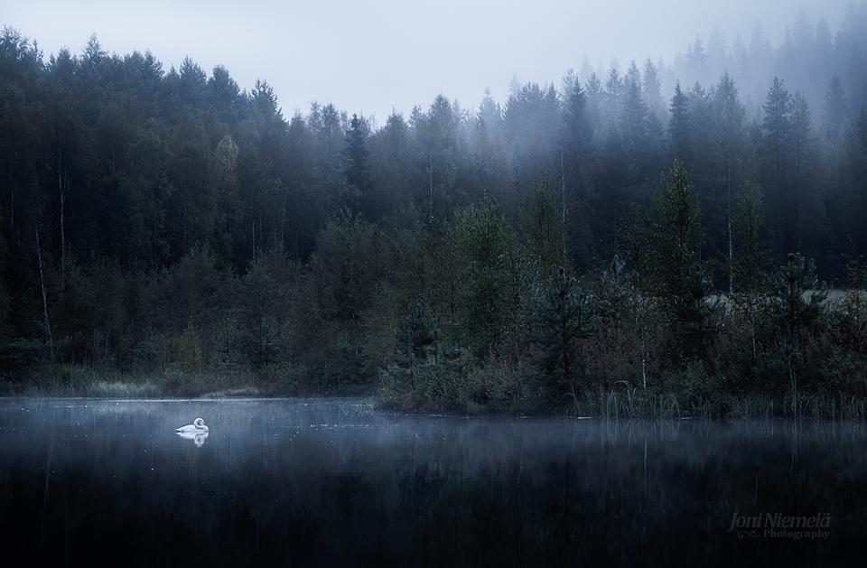 Morning Swan by Nitrok