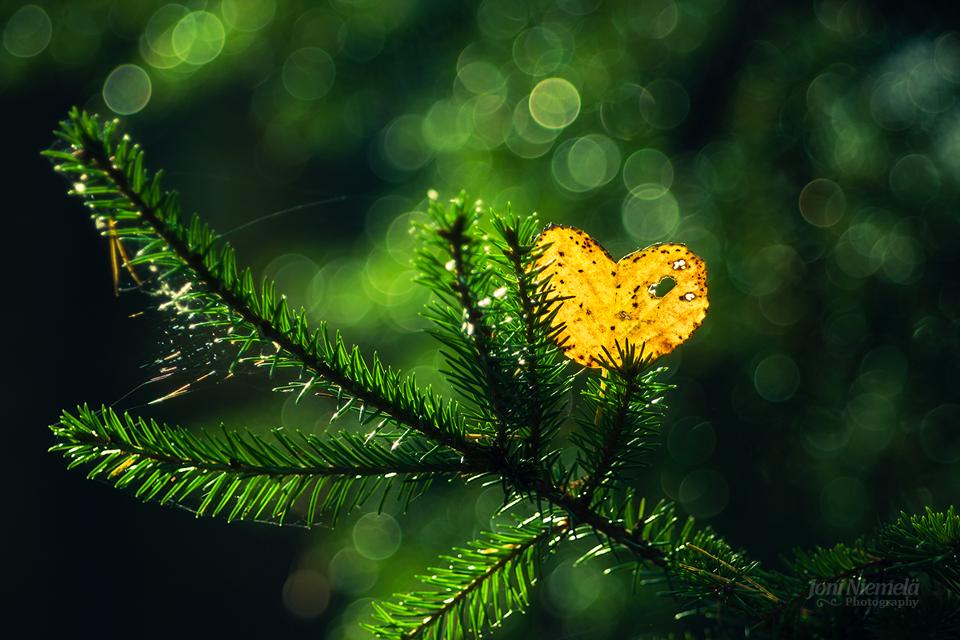 Heart Of Autumn by Nitrok