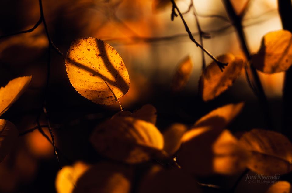Autumn Tones by Nitrok