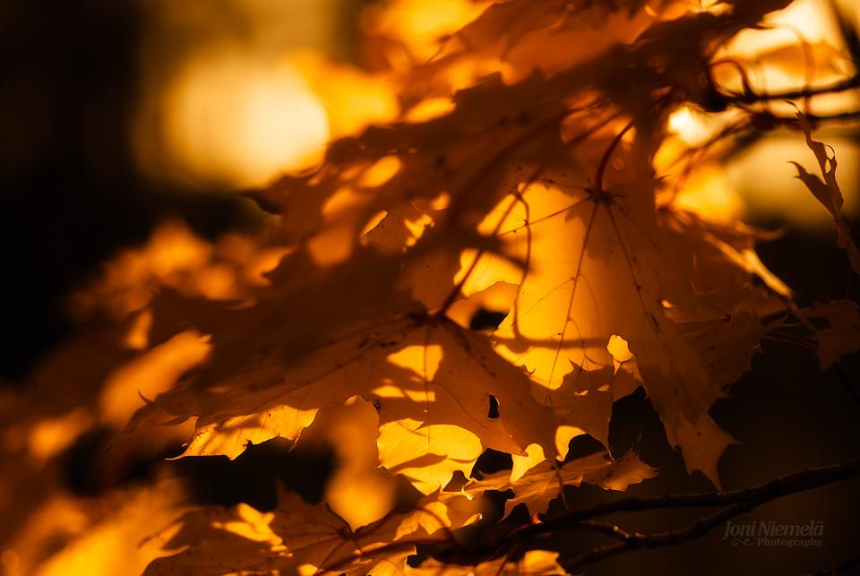 Autumn Tones II by JoniNiemela