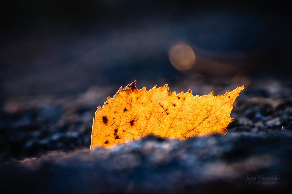 Birch Leaf by JoniNiemela