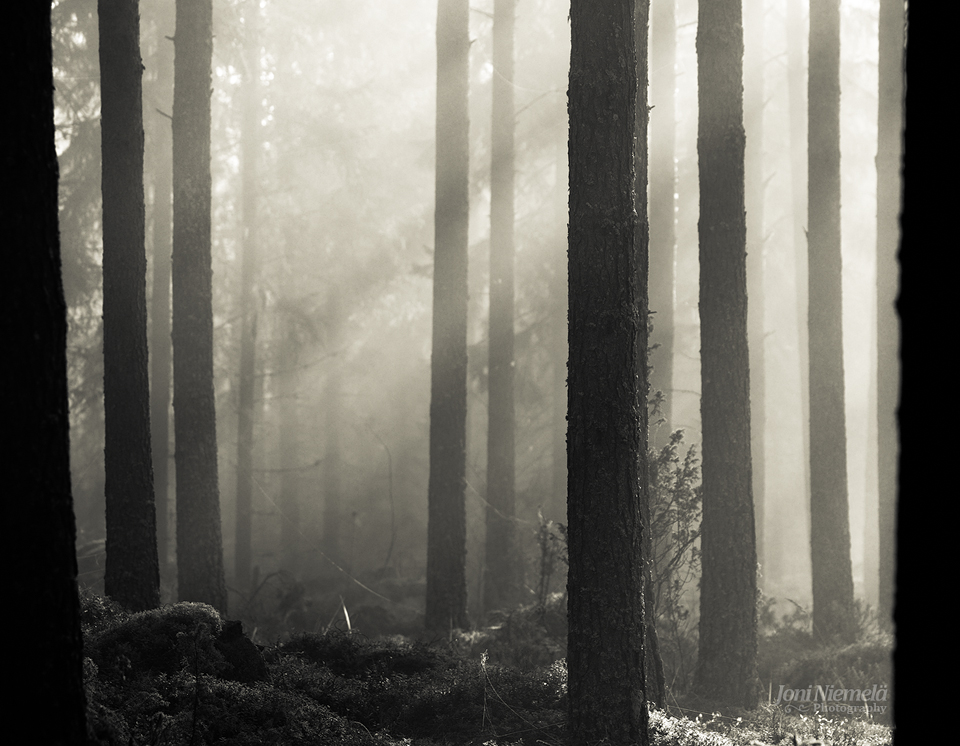 Pineforest by Nitrok