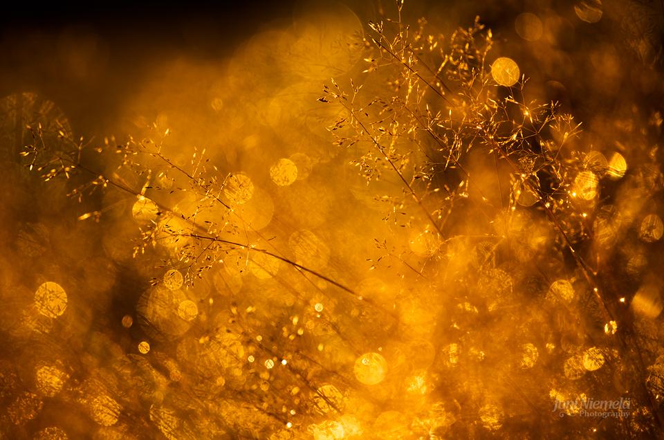 Goldy by Nitrok