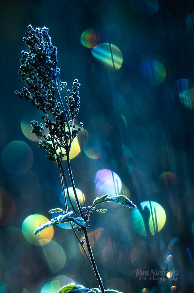 Frost by JoniNiemela
