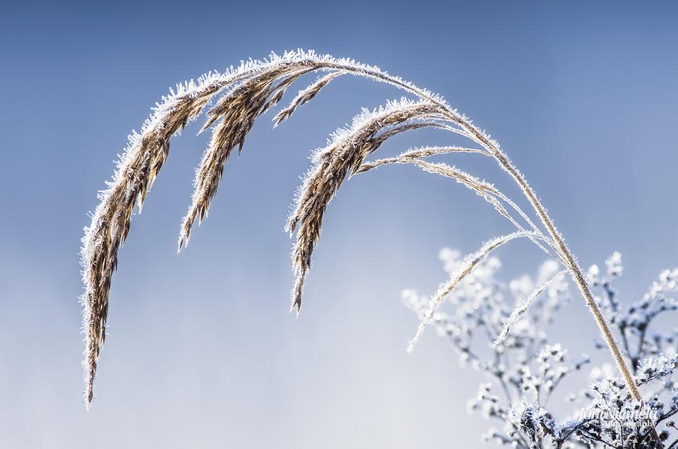 Frosty Hay by JoniNiemela
