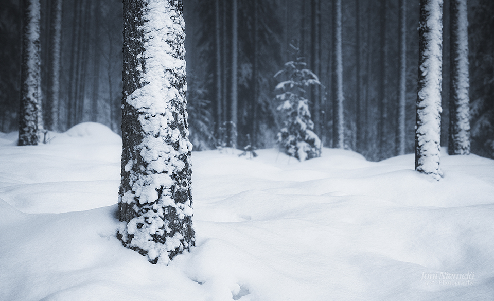 Snow Covered Trees by Nitrok