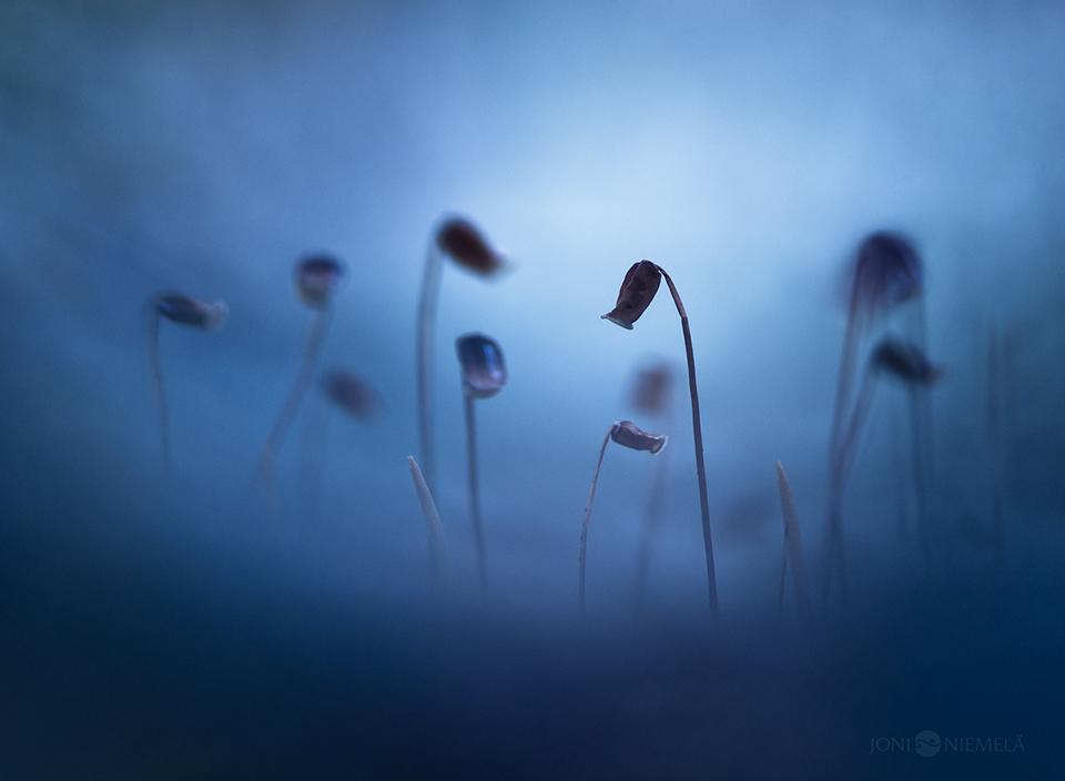 Forgotten by JoniNiemela