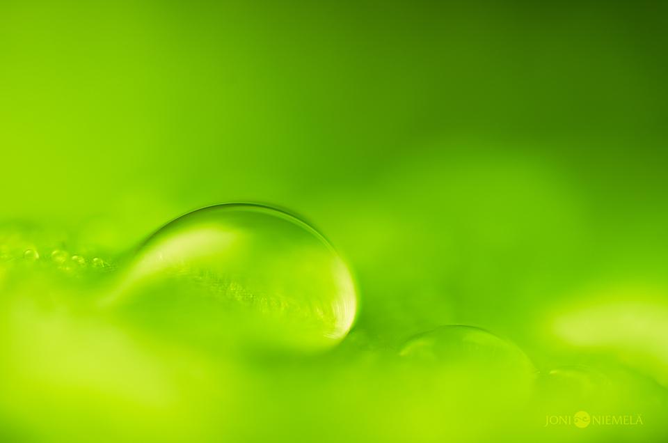 Fresh And Green by JoniNiemela