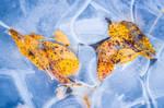 Frozen Down by JoniNiemela
