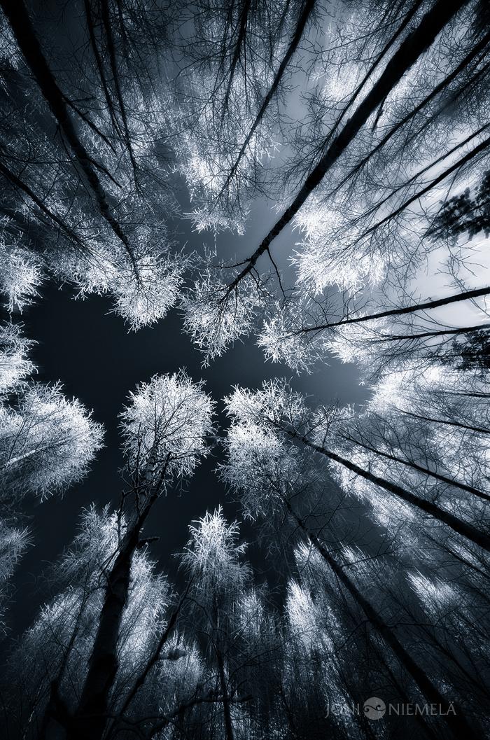 Black Woods by JoniNiemela