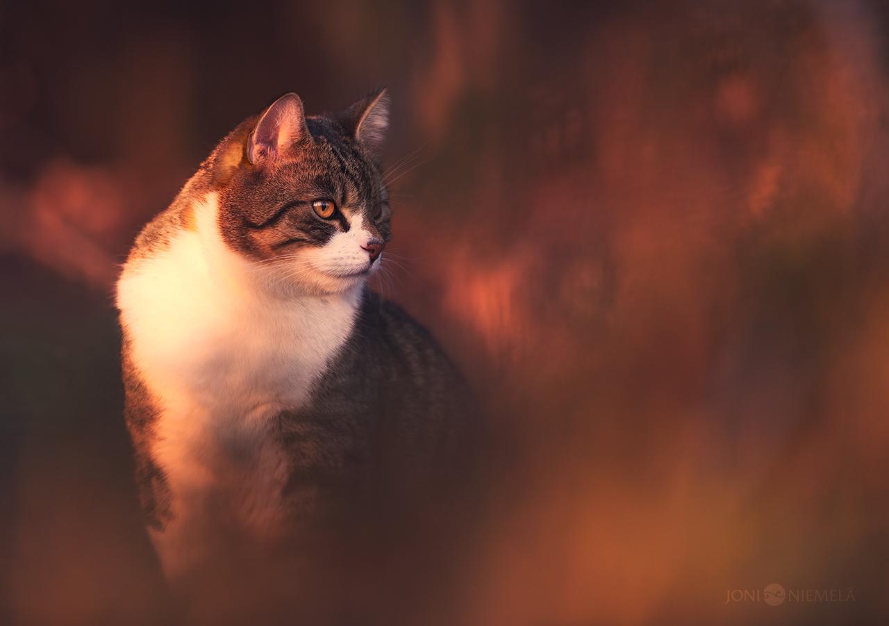 Spot by JoniNiemela