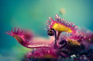 Alien Plant by JoniNiemela