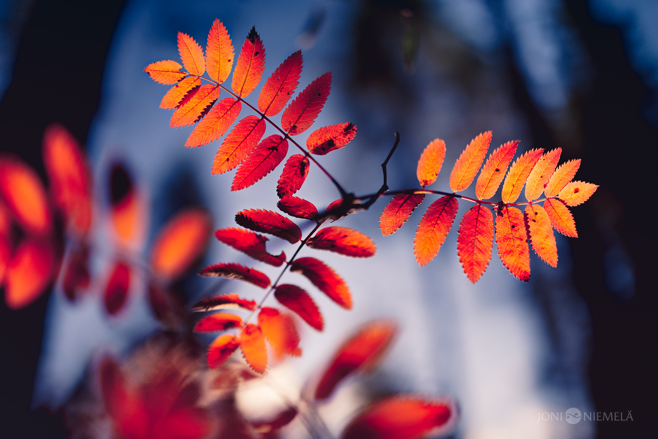 Orange Fall by Nitrok