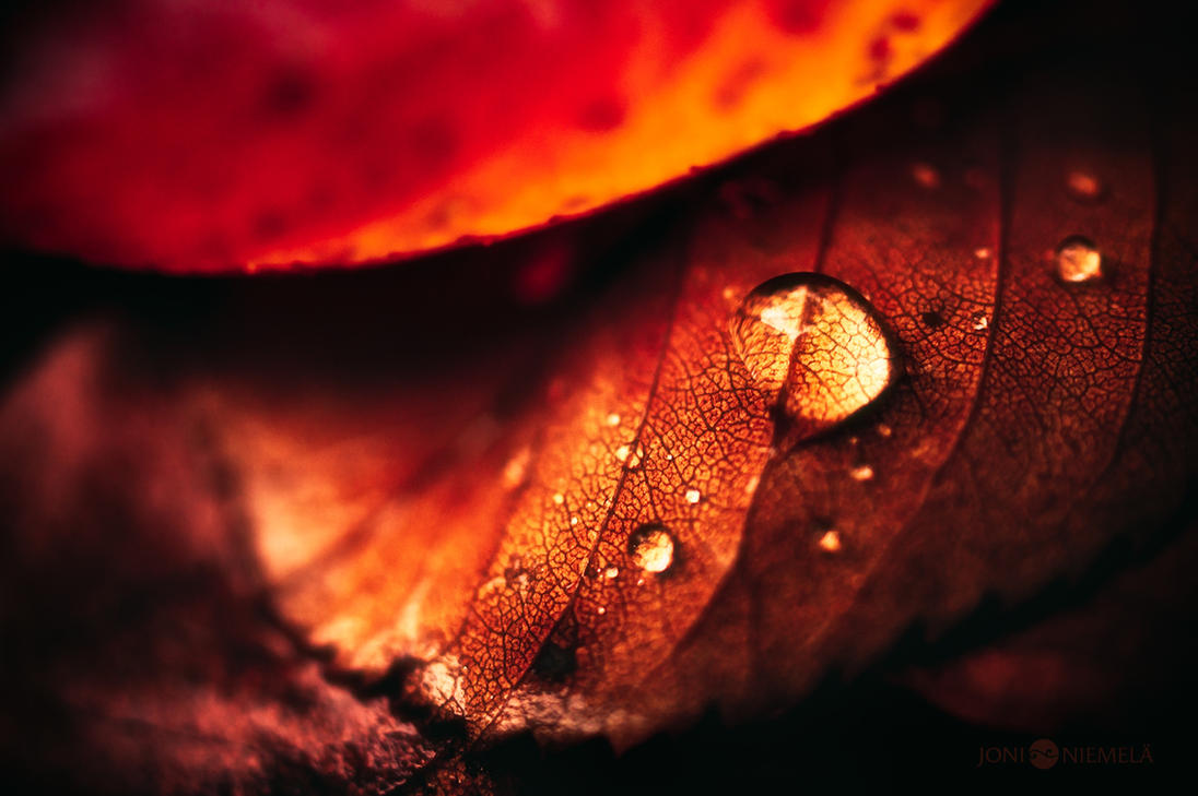 Autumn Drop by Nitrok