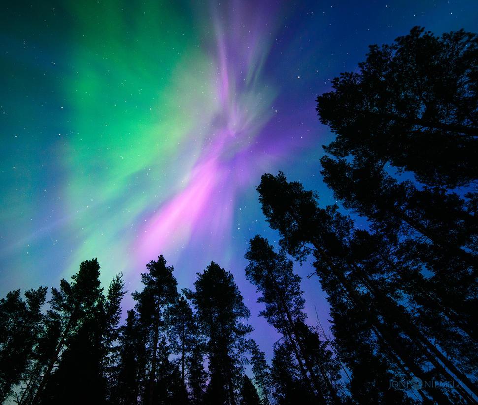 Pink Northern Lights by JoniNiemela