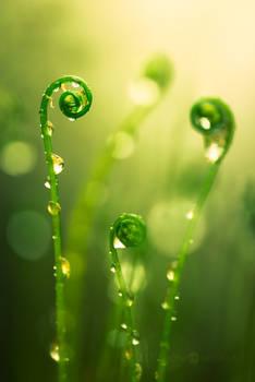 Rising Ferns