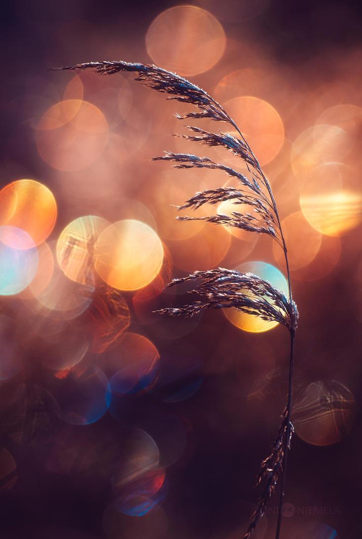 Hay by JoniNiemela