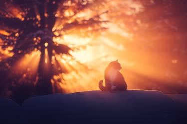Cat In The Winter Mist