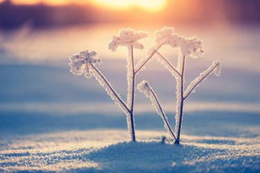 Snowfrost by JoniNiemela