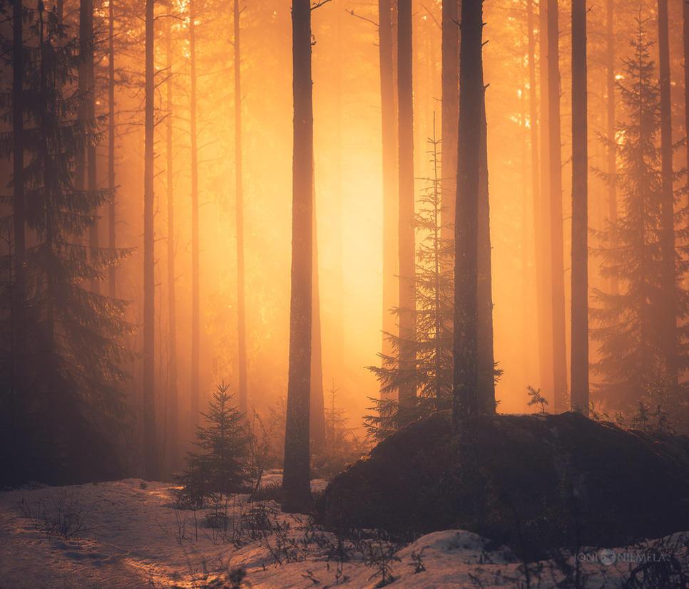 Elven Forest by JoniNiemela