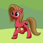 Pun pony practice