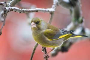 Birdies #8