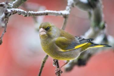 Birdies #8 by Prozerpin