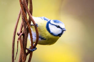 Birdies #44 by Prozerpin