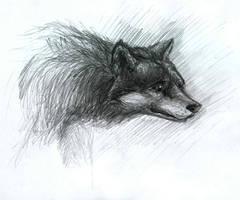 Wolf 02