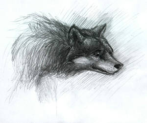 Wolf 02 by Ciepson