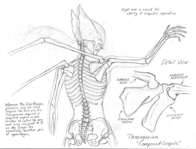Anatomy Of A Combine : Anatomy of a hawkgirl by promus kaa on deviantart