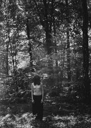 dark forest by ccconvoitise
