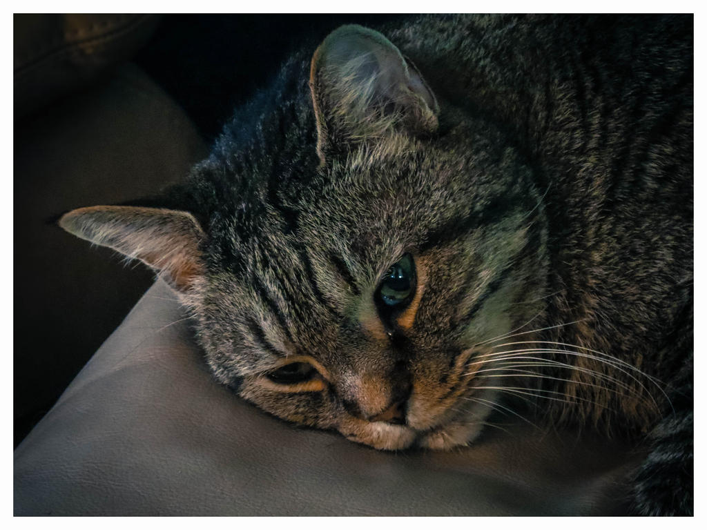 a sleepy tabby. by CombustingStar