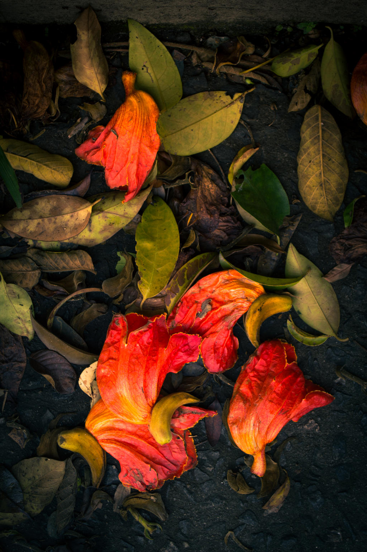 Autumn by omgitsnanda