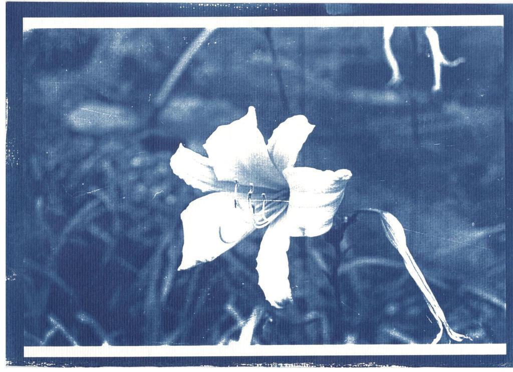 Cianotipia flor by omgitsnanda