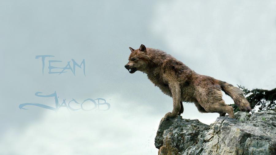 Jacob Black Werewolf Jacob Black Wallpaper 02 Wolf