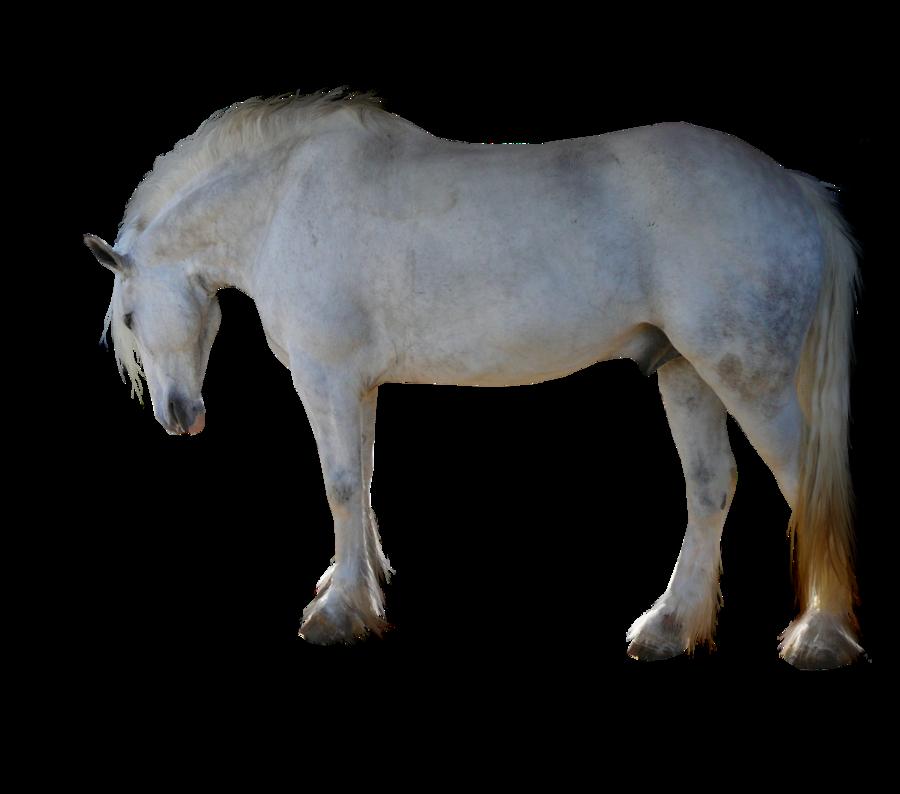 PRECUT Stock - Dapple Grey Horse by TriOpticStock