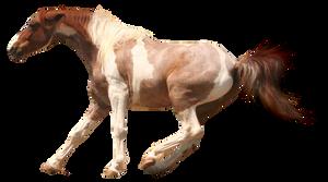 PRECUT Stock - Paint Horse by TriOpticStock
