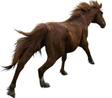 PRECUT Stock - Chestnut Horse by TriOpticStock