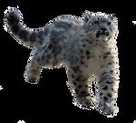 PRECUT Stock - Snow Leopard