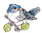 just an ordinary bird