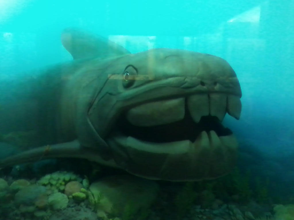 Dunkleosteus Related K...