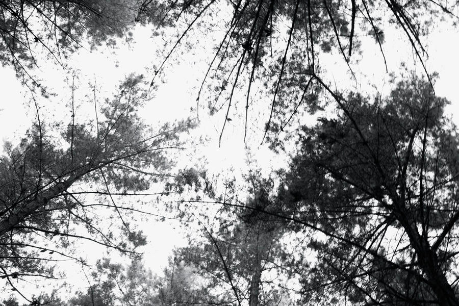 Trees by Futz5