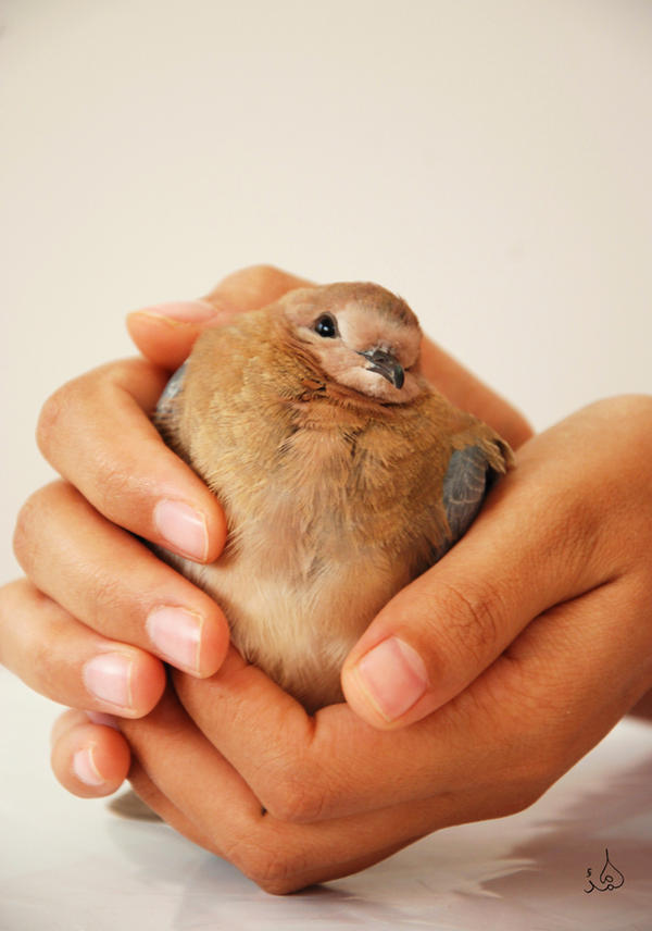hand love dove ^_^ by M3los93