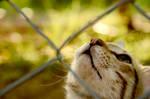amazing cat 2
