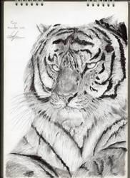 Tiger by Eudj