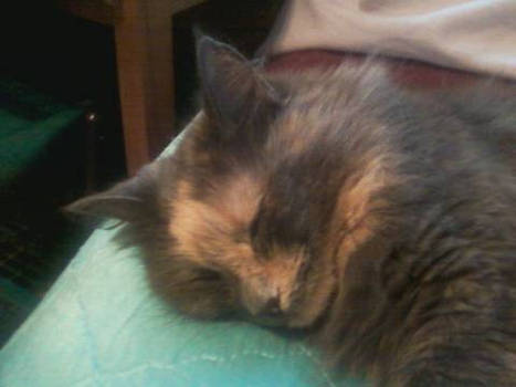 Sky is a very sleepy kitty lol