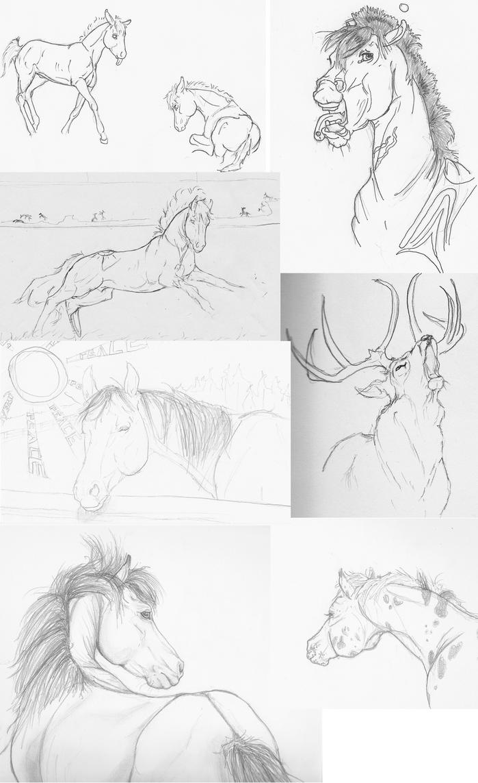 mustang horse essay