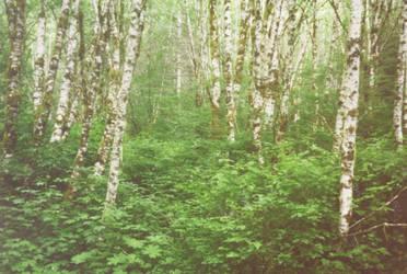 definition of undergrowth