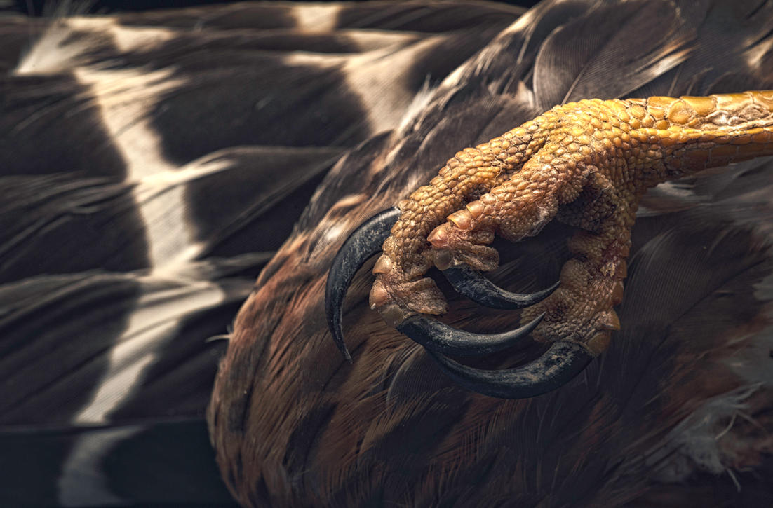 Talon by pfrancke